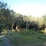 Genova: Parchi di Nervi 4
